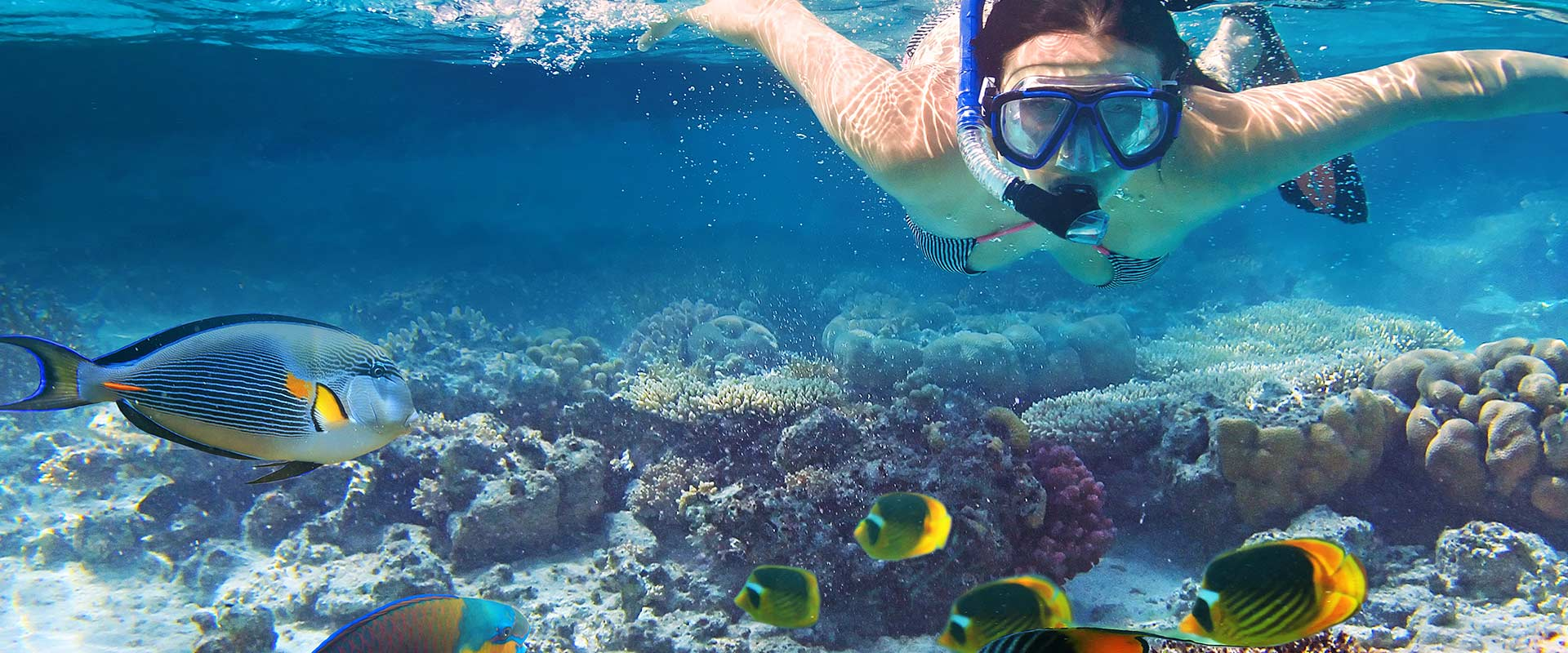 Grand Bahama Island snorkelen