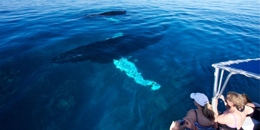 whale-watching-Turks-en-Caicos