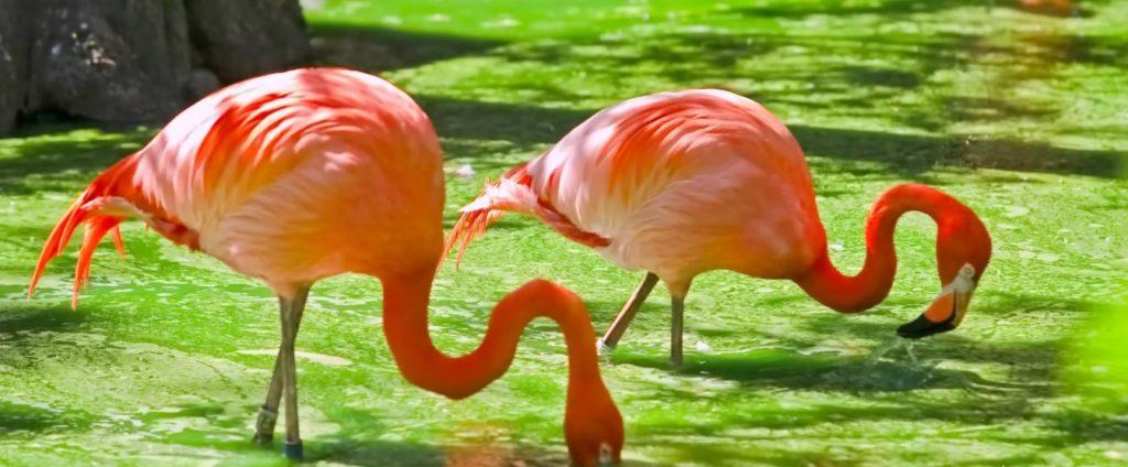 Turks-Caicos-vogels kijken