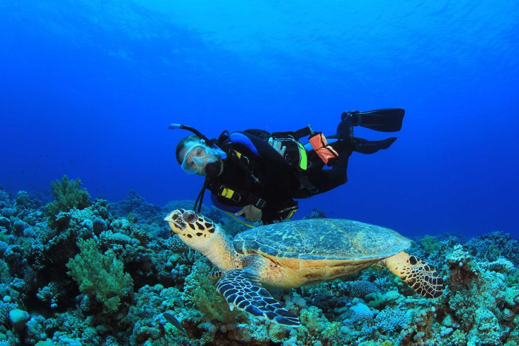 diving-in-curacao