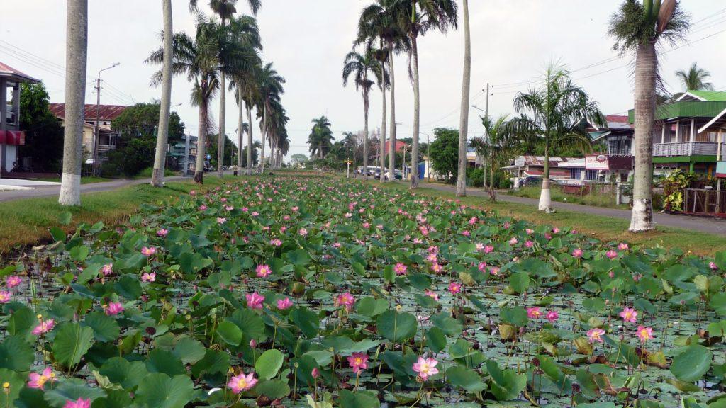 Nieuw-Nickerie-Suriname