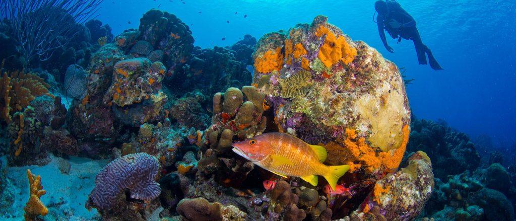 diving-bonaire