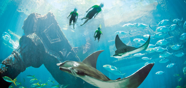 snorkelen bahama's
