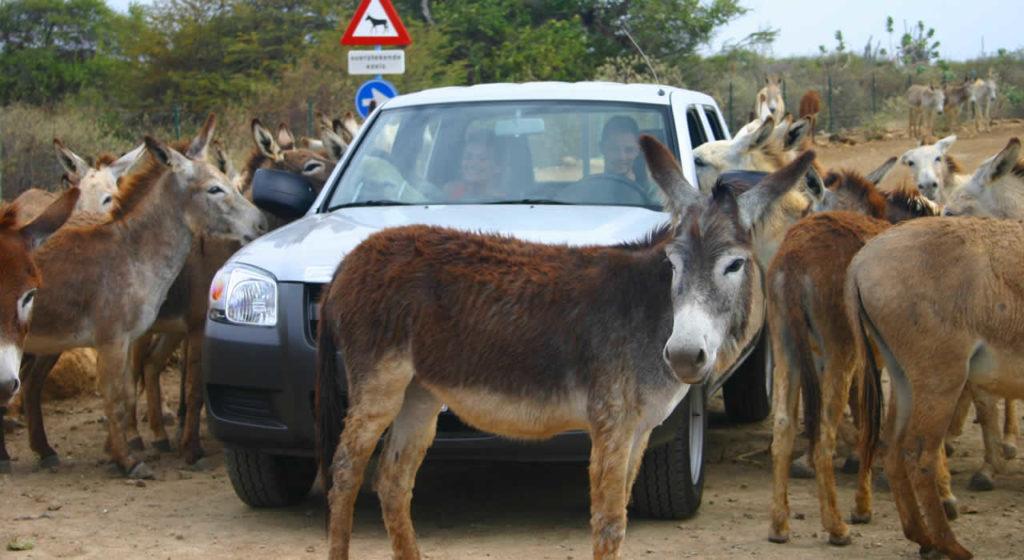 bonaire-donkey-heiligdom