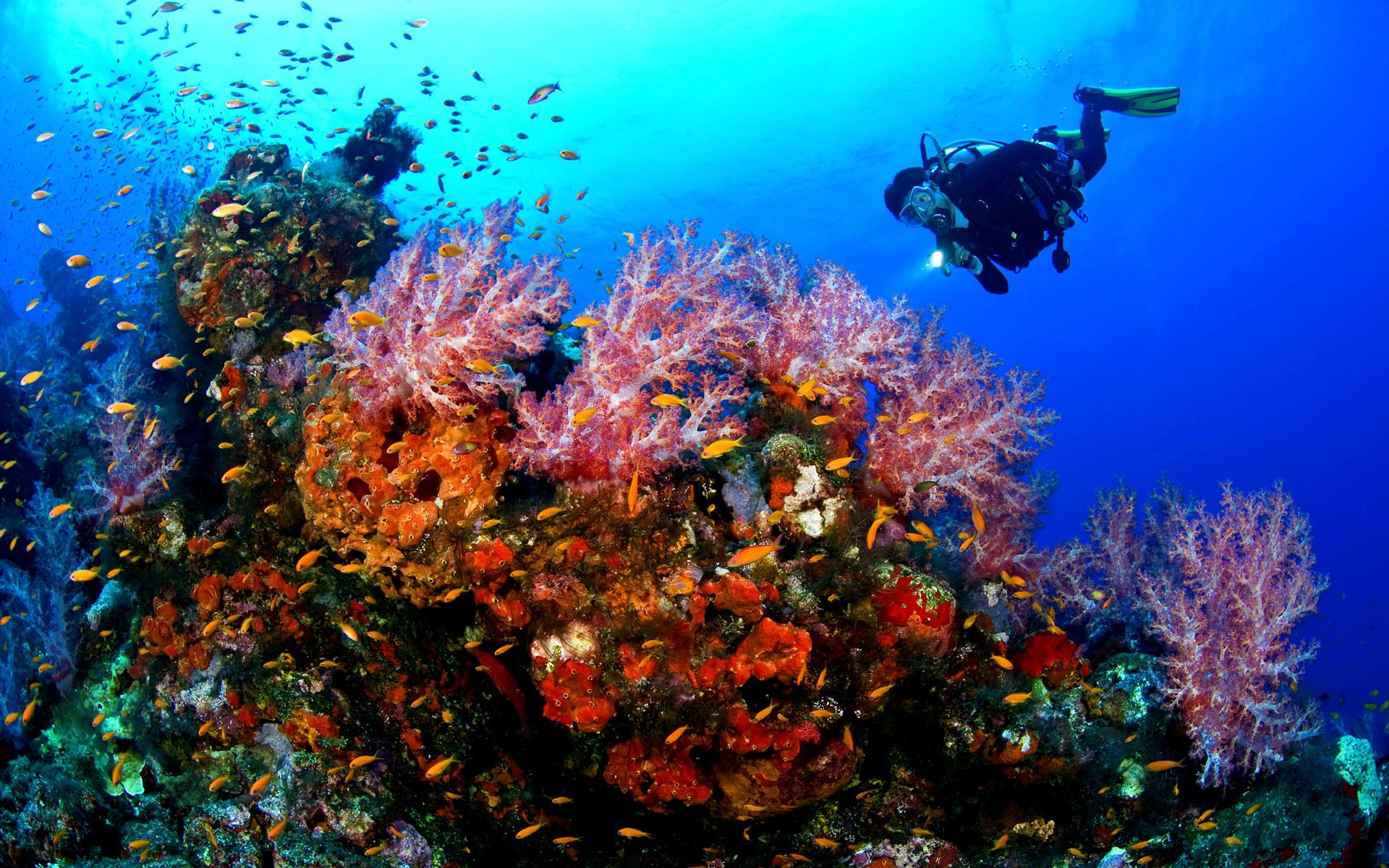 Elbow Cay duiken
