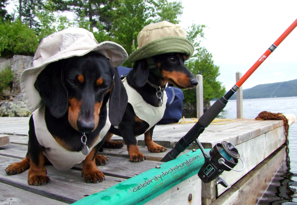 chiens caribbean