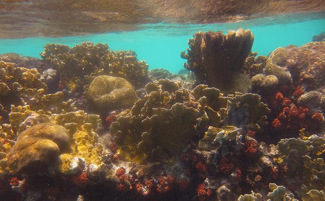 corail Bonaire