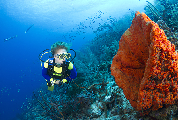Best Caribbean countries for snorkeling.