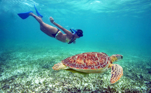 A girl swimming with sea turtles in the Caribbean.