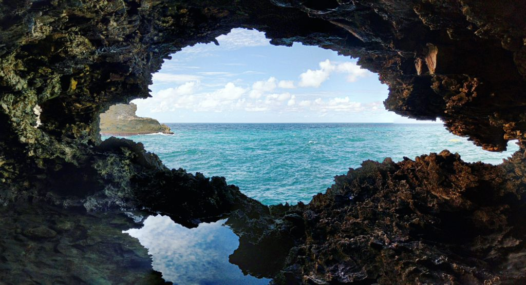Visita animal flower cave in Barbados.