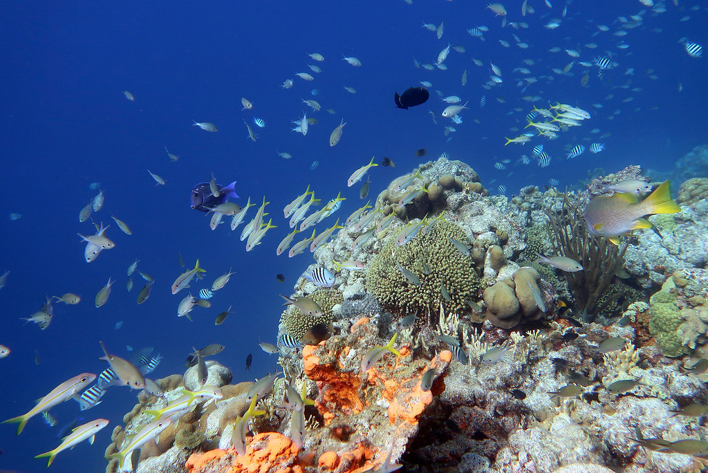 Best Caribbean coral reefs.