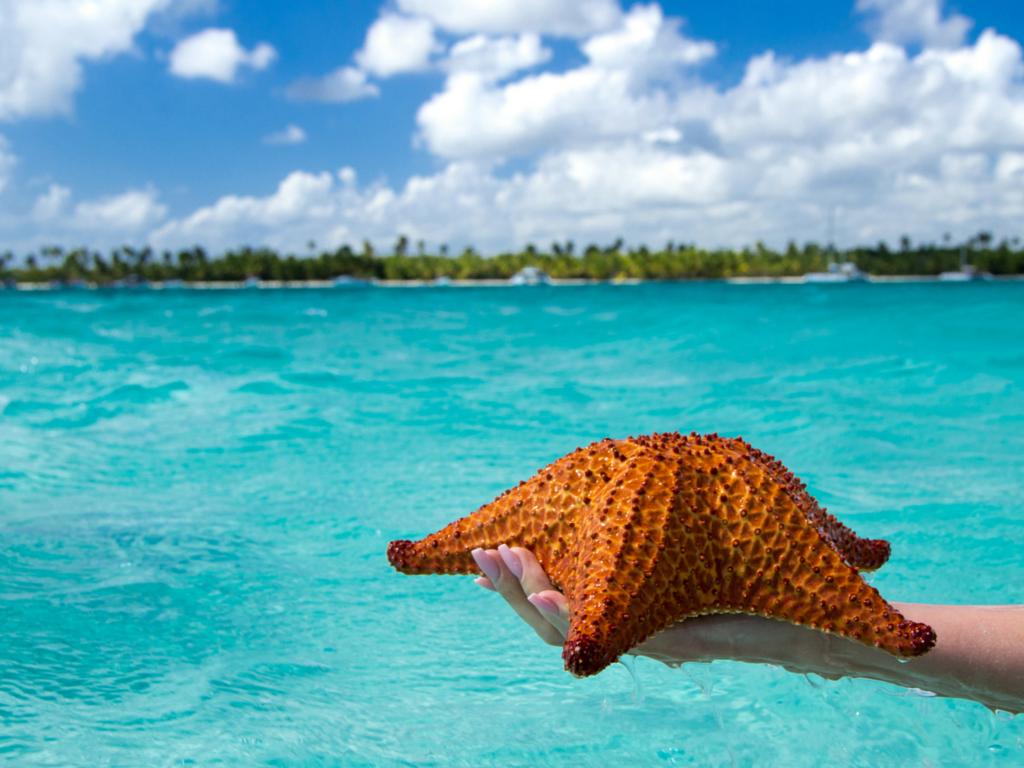 Saona island is top thing to do Punta Cana.